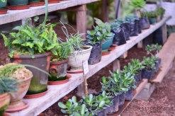 cafe_jardin_santa_lucia_Honduras_3